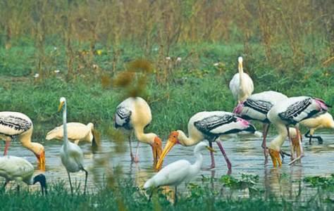 Bharatpur-Bird-Santuary